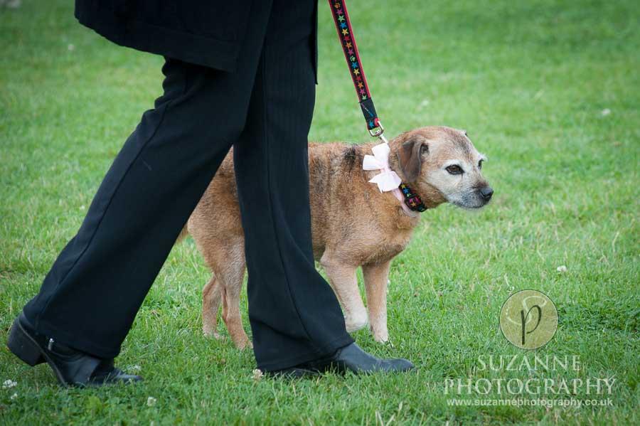 Golden Paws Ranch Dog Show York 0043