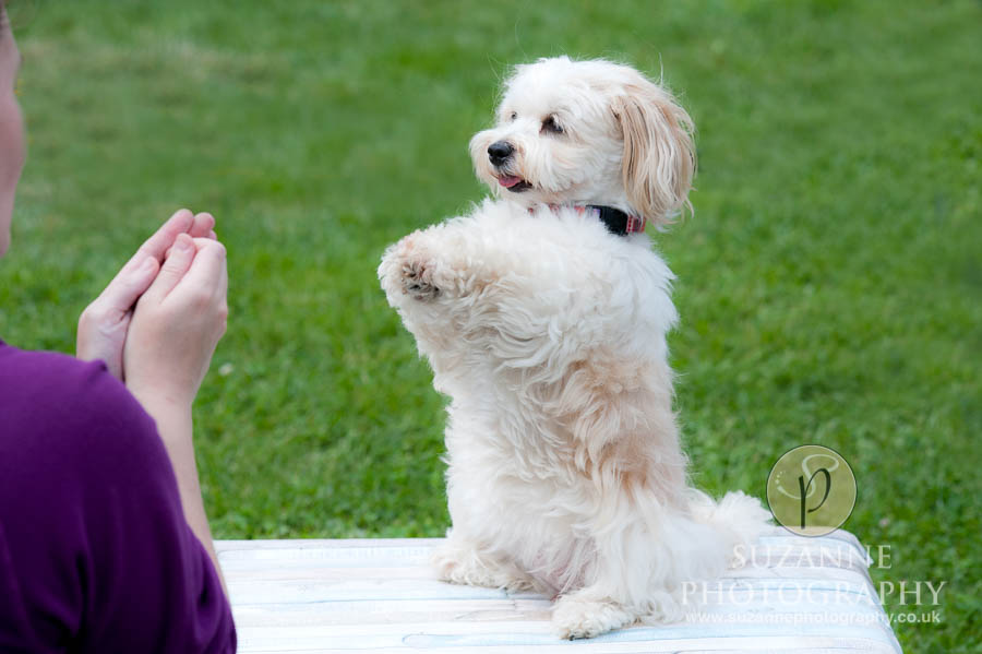 Golden Paws Ranch Dog Show York 0079 C1