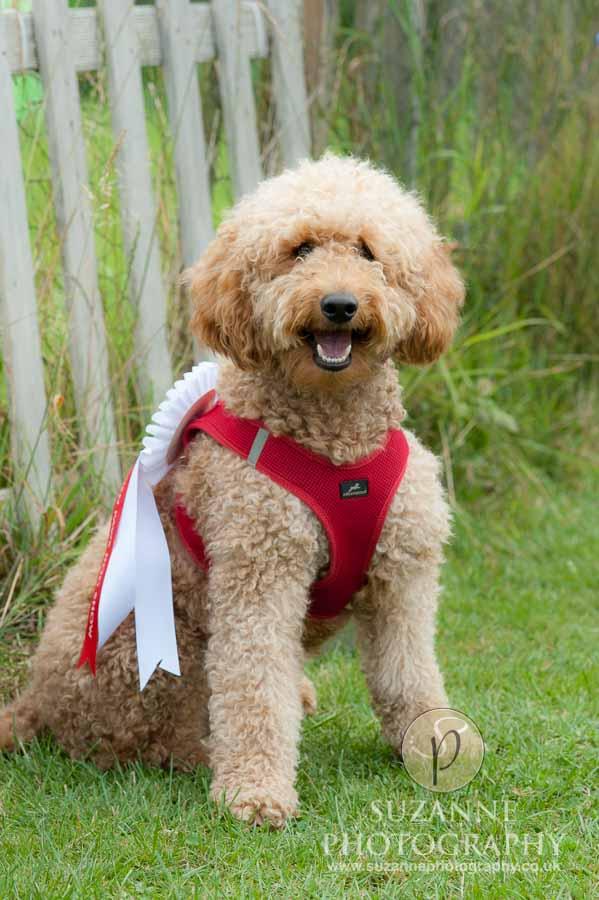 Golden Paws Ranch Fun Dog Show York 0085