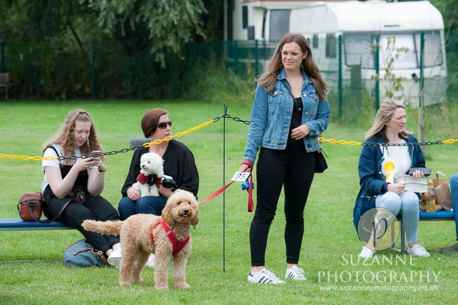 Golden Paws Ranch Fun Dog Show York 0094