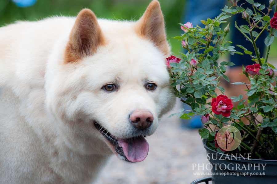 Golden Paws Ranch Fun Dog Show York 0103