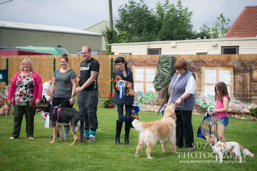 Golden Paws Ranch Fun Dog Show York 0106