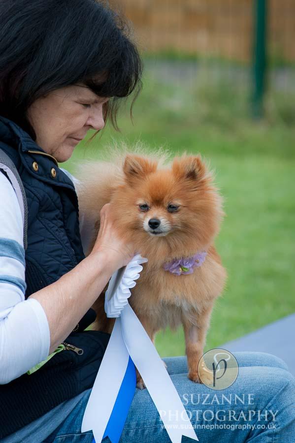 Golden Paws Ranch Fun Dog Show York 0113