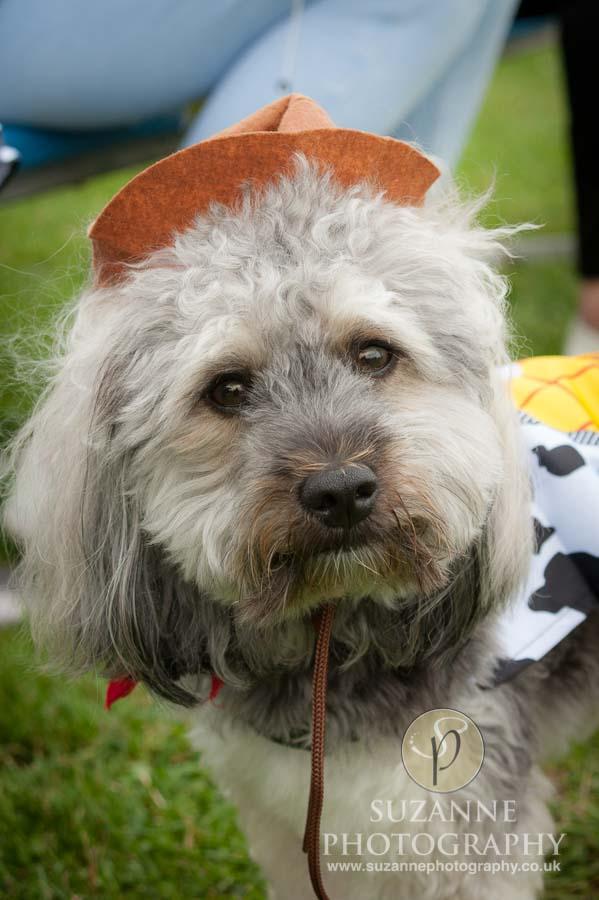 Golden Paws Ranch Fun Dog Show York 0120