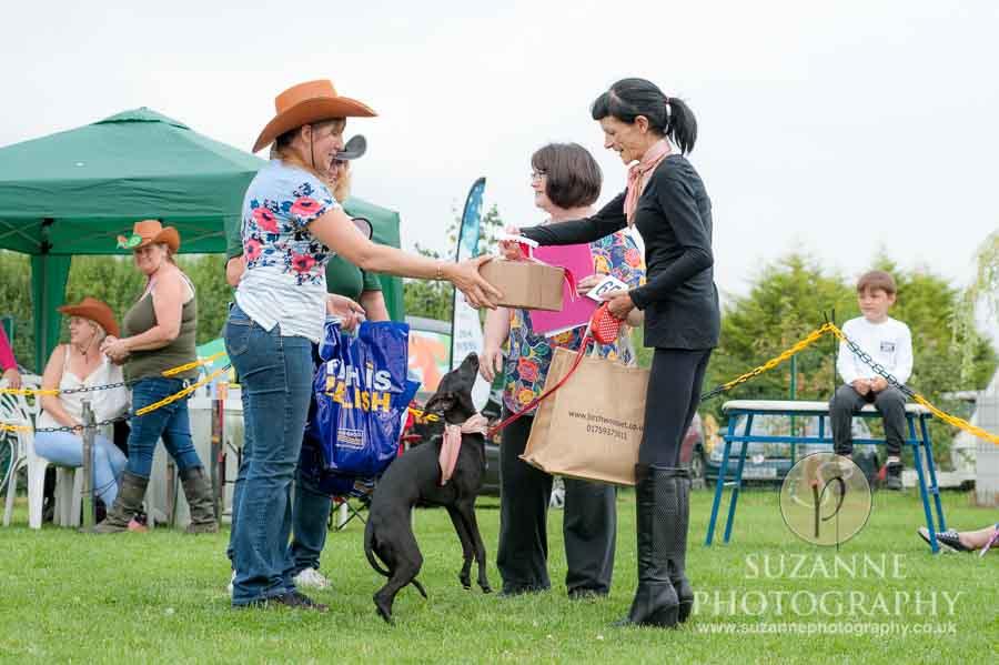 Golden Paws Ranch Fun Dog Show York 0125