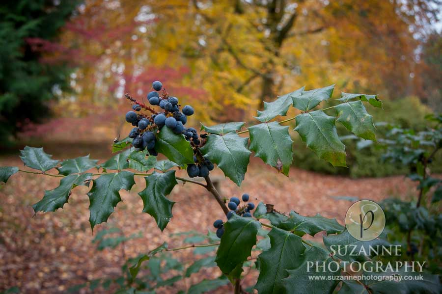Thorp-Perrow-Arboretum-and-Gardens-at-Bedale-0015