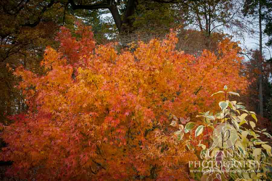 Thorp-Perrow-Arboretum-and-Gardens-at-Bedale-0018