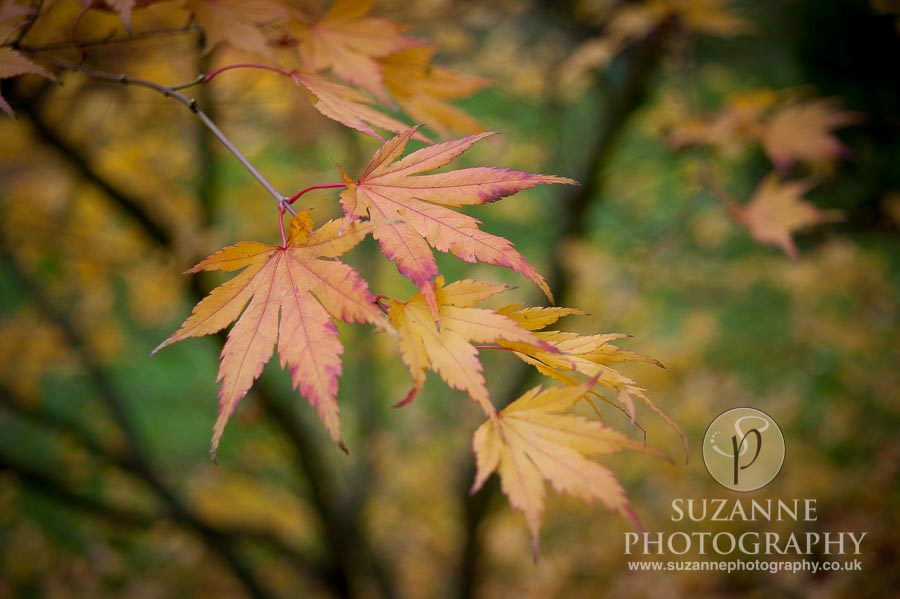 Thorp-Perrow-Arboretum-and-Gardens-at-Bedale-0023