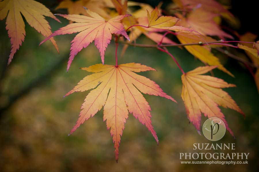 Thorp-Perrow-Arboretum-and-Gardens-at-Bedale-0025