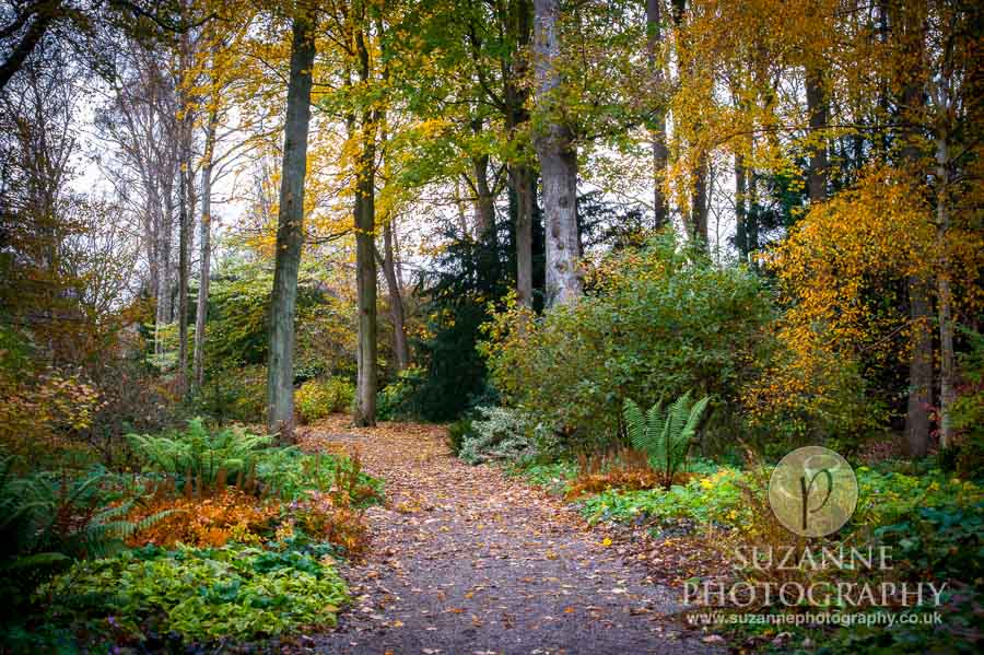 Thorp-Perrow-Arboretum-and-Gardens-at-Bedale-0065