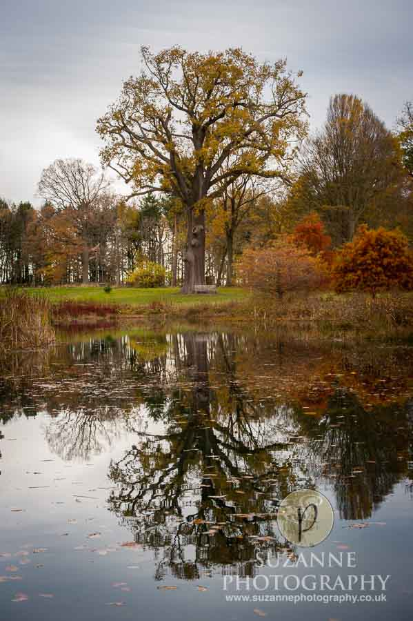 Thorp-Perrow-Arboretum-and-Gardens-at-Bedale-0072