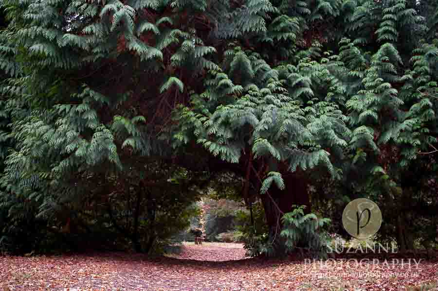 Thorp-Perrow-Arboretum-and-Gardens-at-Bedale-0079