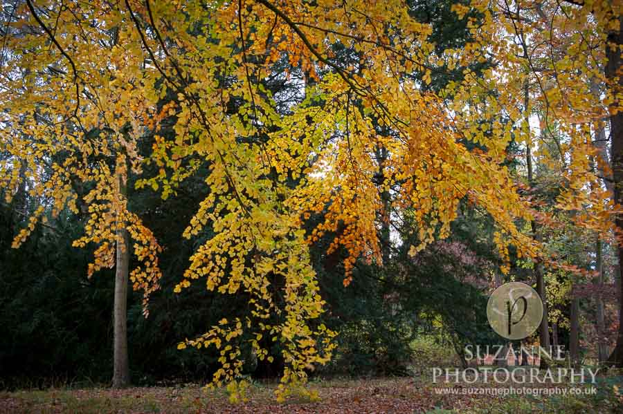 Thorp-Perrow-Arboretum-and-Gardens-at-Bedale-0081