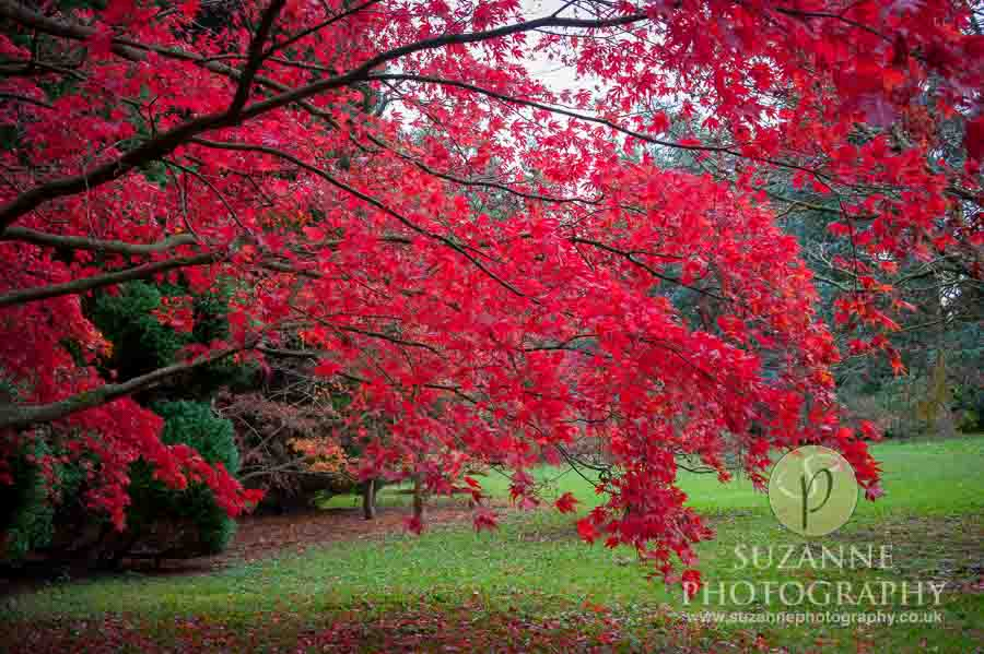 Thorp-Perrow-Arboretum-and-Gardens-at-Bedale-0084