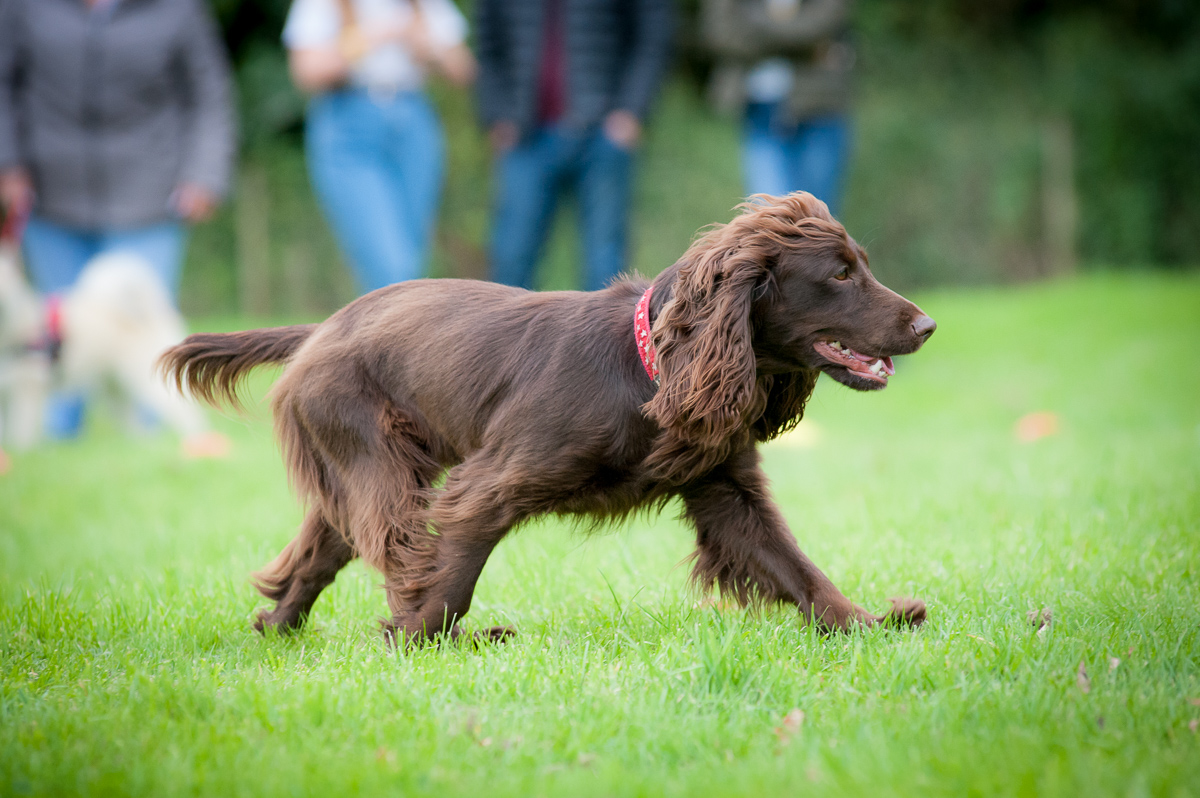 Upcoming Event Paws in The Park York