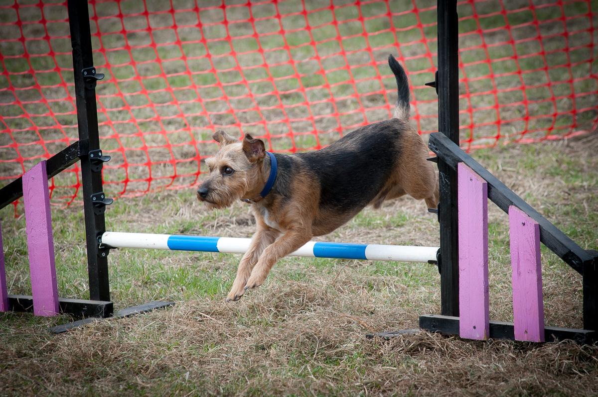 Upcoming Event Farmer Copleys Fun Dog Show